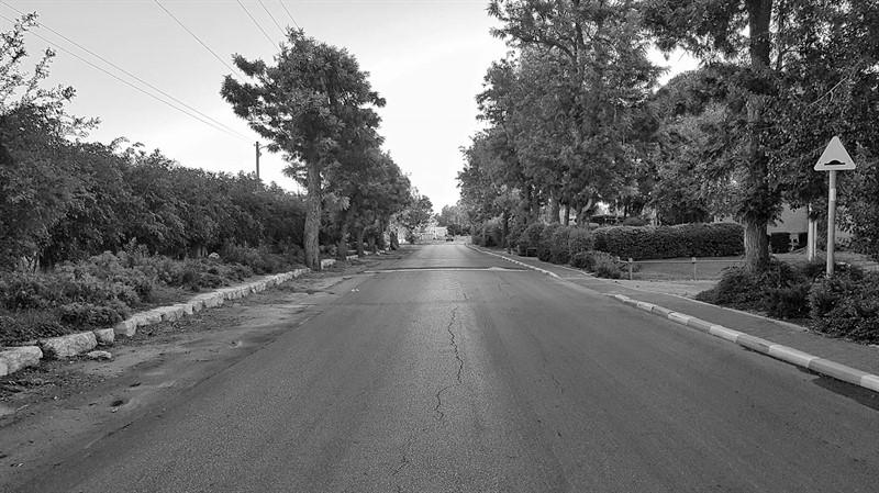 כביש בשדרת עצים פעם במושב שחור לבן