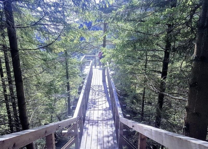 גשר תלוי ביער מדרגות מובילות